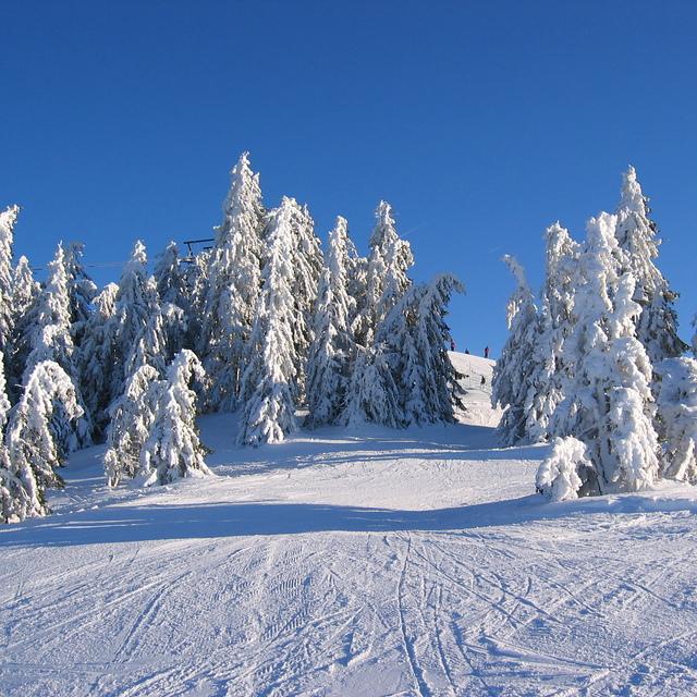 Snowy trees, Scheffau