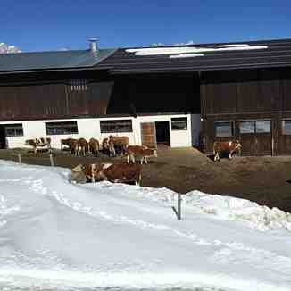 Cow Shed, Going