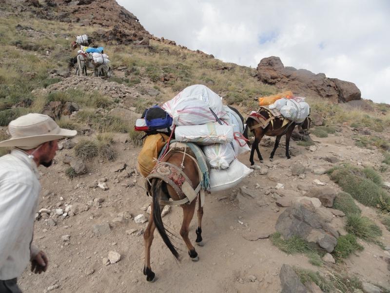 قاطران باربر و کارگران روزمزد کوه دماوند, Mount Damavand