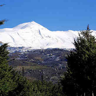 Mount Sannine, Lebanon, Cedars