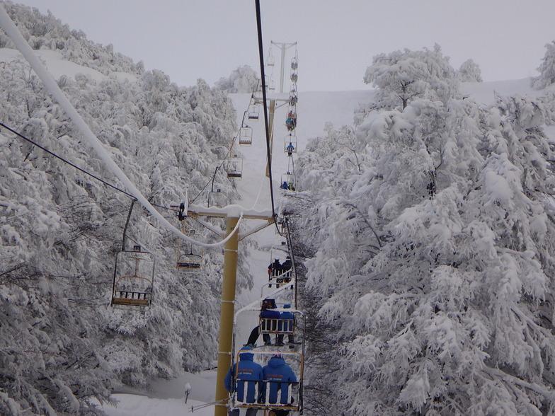 Telesilla, Cerro Mirador