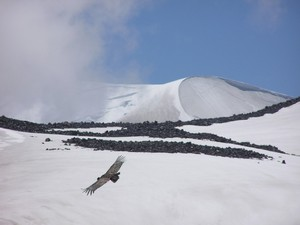Volcan Chillan flight of the condor, La Parva photo