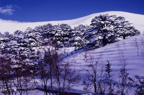 Cedars Ski Resort by: Byung Chun,Moon