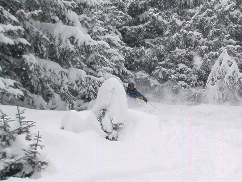 powder in the trees above Davos