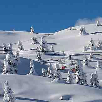 Snowy Trees, Madonna di Campiglio