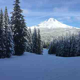 Off Multopor towards Mt. Hood, Mt Hood Ski Bowl