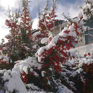 Kar ve gül, Karbogazi