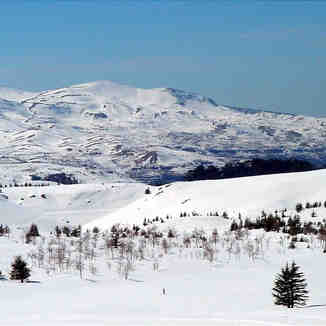 The Cedars, Lebanon