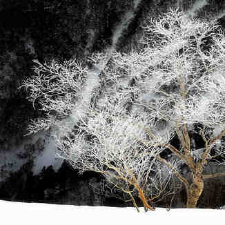 Japanese Frozen Trees, Kurodake