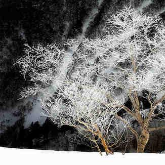 Japanese Frozen Trees, Kurodake