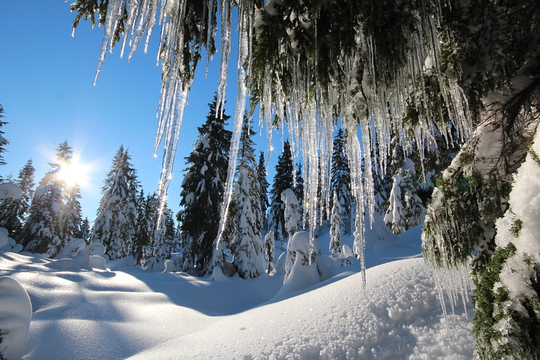 Icicles in paradise, Mount Seymour