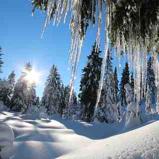 Icicles in paradise, Mt Seymour