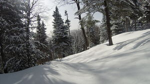 Immaculate powder, Ski La Reserve photo