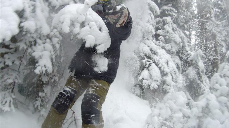 Forest ski, Ski La Reserve