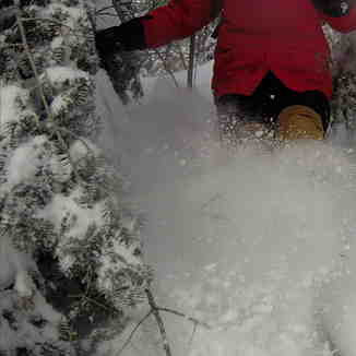 Forest ski II, Ski La Reserve