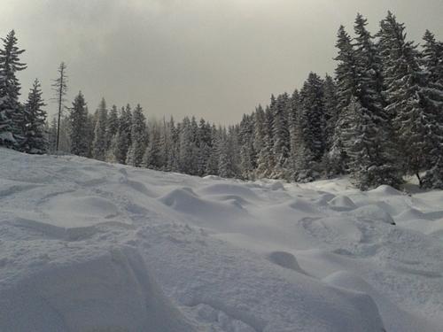 Vitosha Ski Resort by: neda