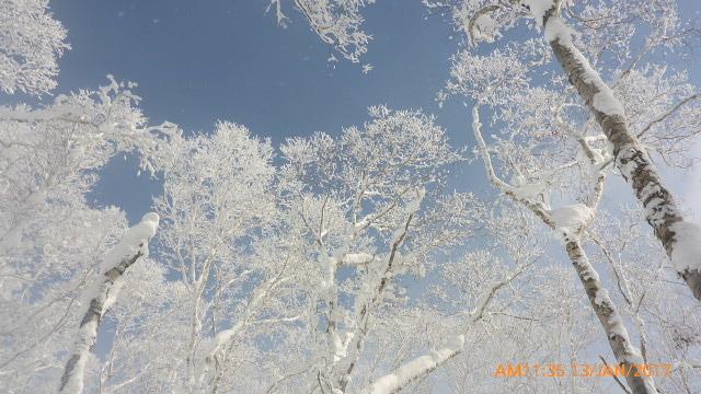 Japow trees, Rusutsu Resort
