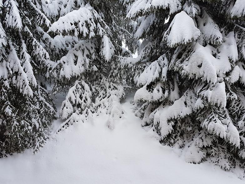 Snowfall 2, Leysin