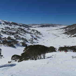 Tree Run, Charlotte Pass