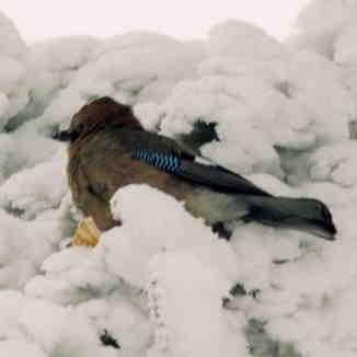 BIRD, Laqlouq