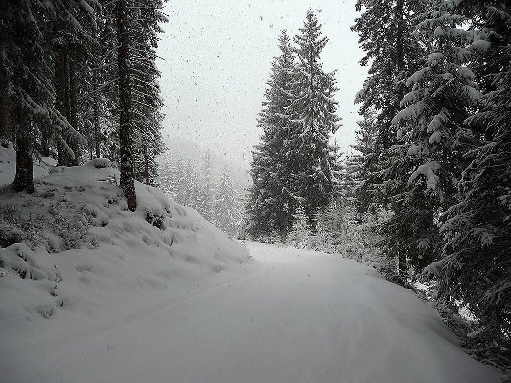 A Forest Track - Inneralpbach, Alpbachtal