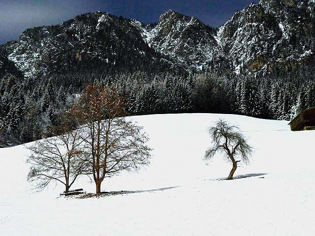 The Great Bear and the Tree, Alpbachtal