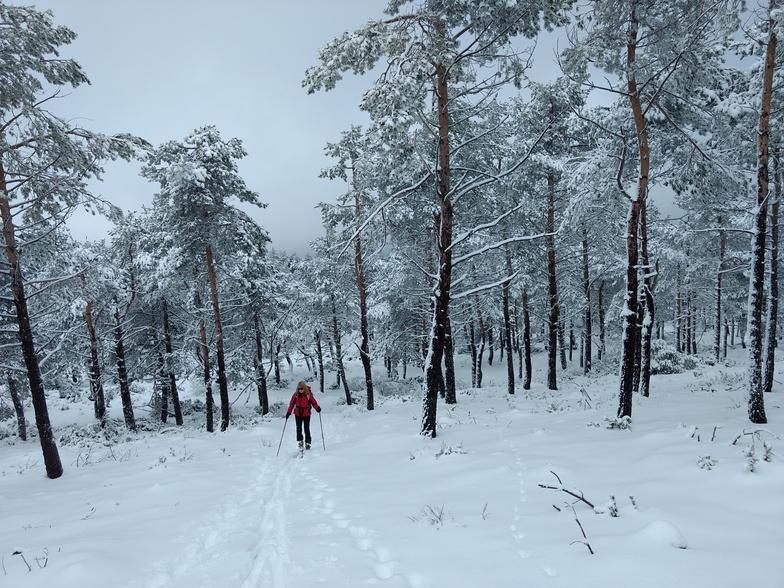 Bosque, Manzaneda