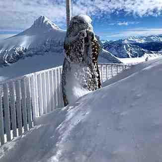 The marmotte, Gstaad Glacier 3000