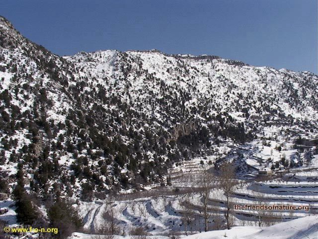 Another pic from Laqlouq, Lebanon, Cedars