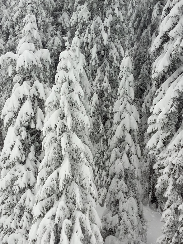 Full of snow, Rogla