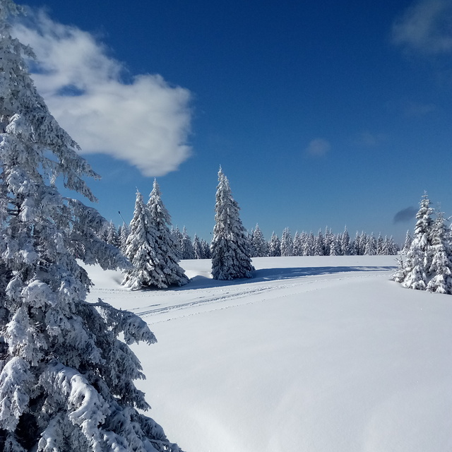 Picture perfect snow, Rogla