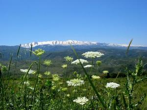 Spring in North Lebanon, Laqlouq photo