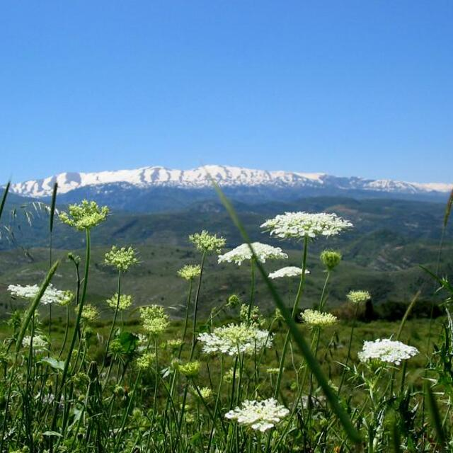 Spring in North Lebanon, Laqlouq