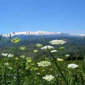 Spring in North Lebanon, Laqlouq