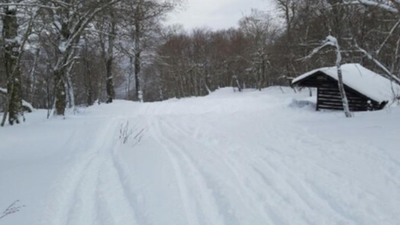 Belleayre snow
