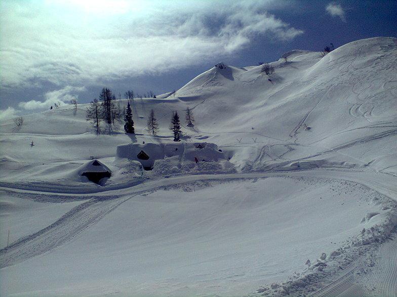 Snow House, Vogel