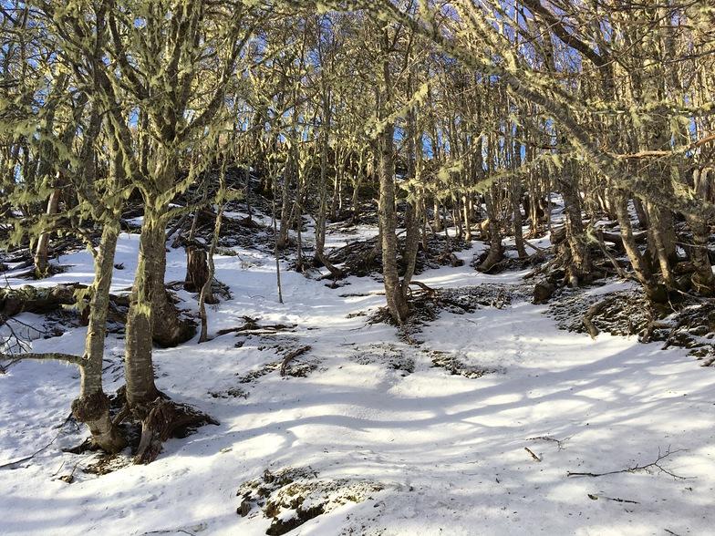 Bosque del Parque Japones, Cerro Mirador