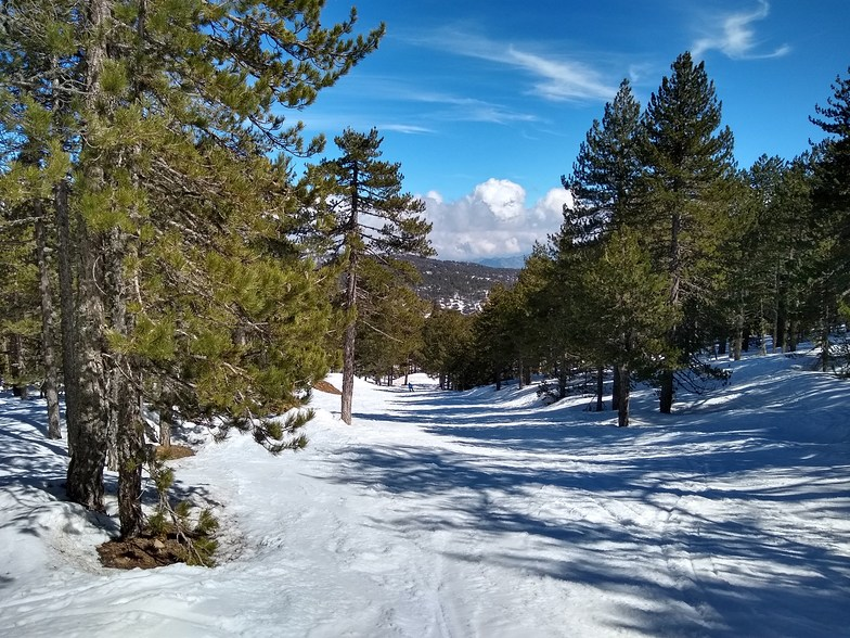 Through the trees to the Hera lift., Mt Olympus