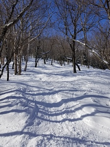 Woods, Jay Peak photo