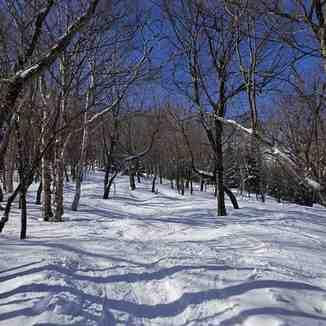 Woods, Jay Peak