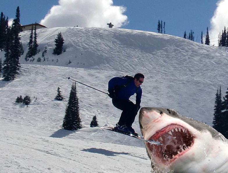 Ski Shark!, Whistler Blackcomb