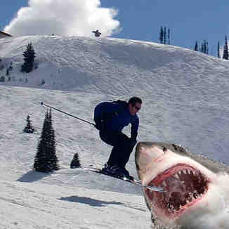Ski Shark!, Whistler Blackcomb