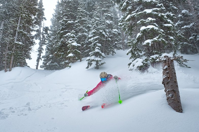 Over 1.5m (5ft) of fresh snow in the last 7 days., Alta