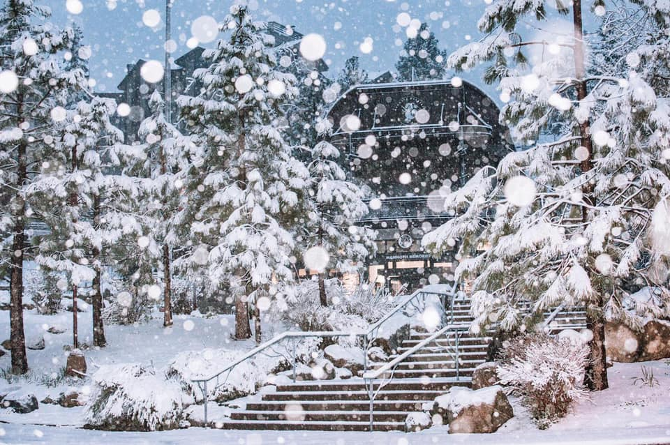 20cm (8 inches) overnight on Friday., Mammoth Mountain