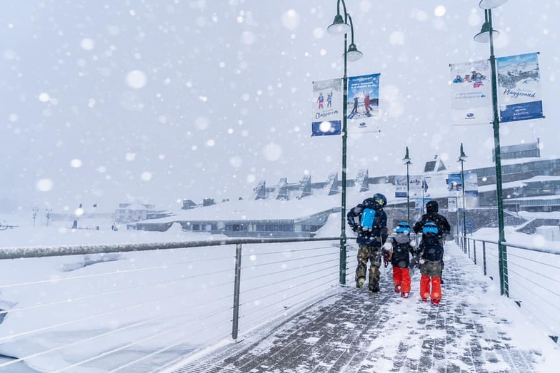 20cm in the past 24 hours., Perisher