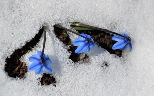 Sarıkamış Ski Resort by: Sarıkamış