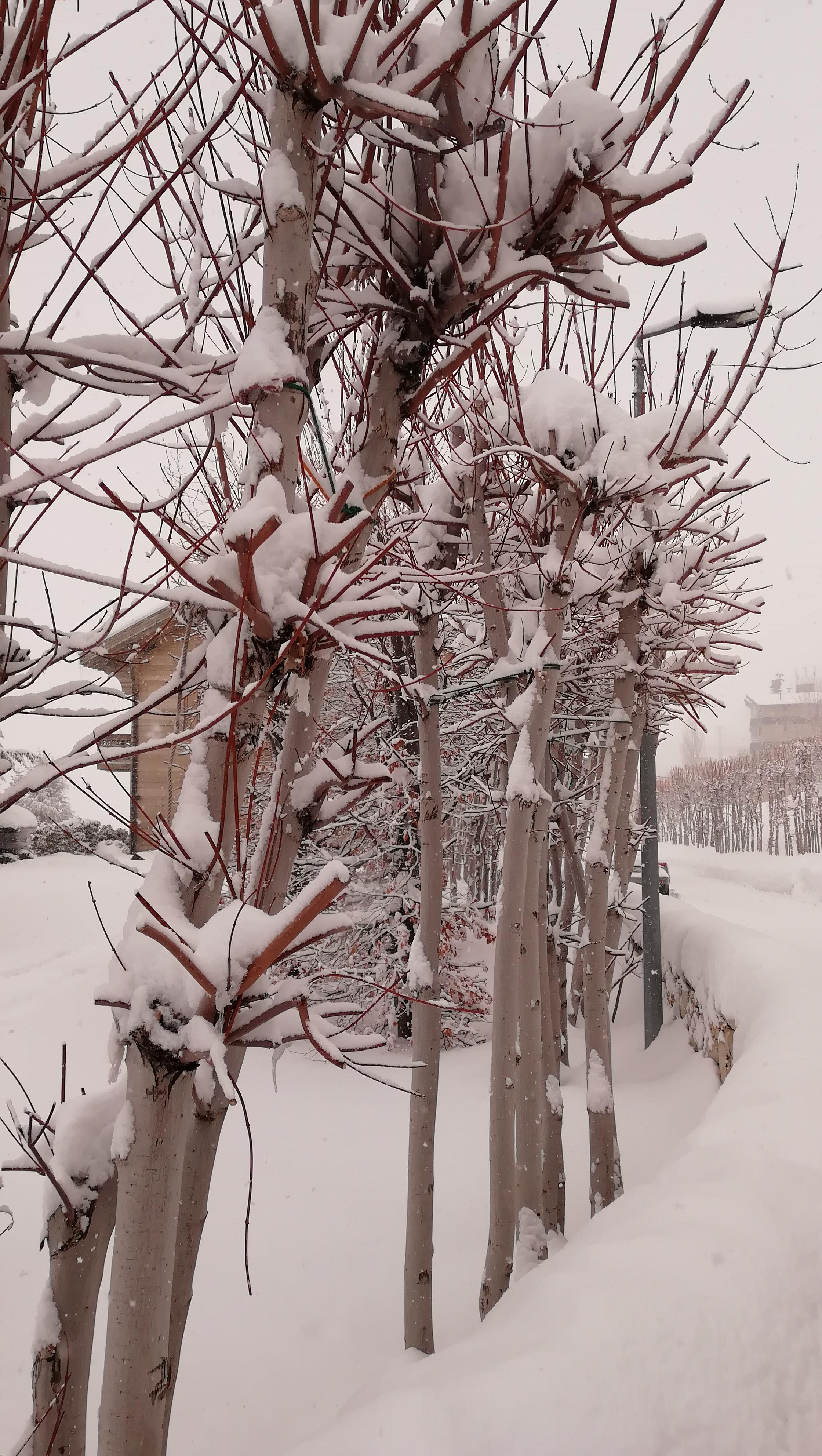 Lovely, Mzaar Ski Resort