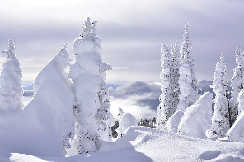 Snowghosts at BRC, Big Red Cats