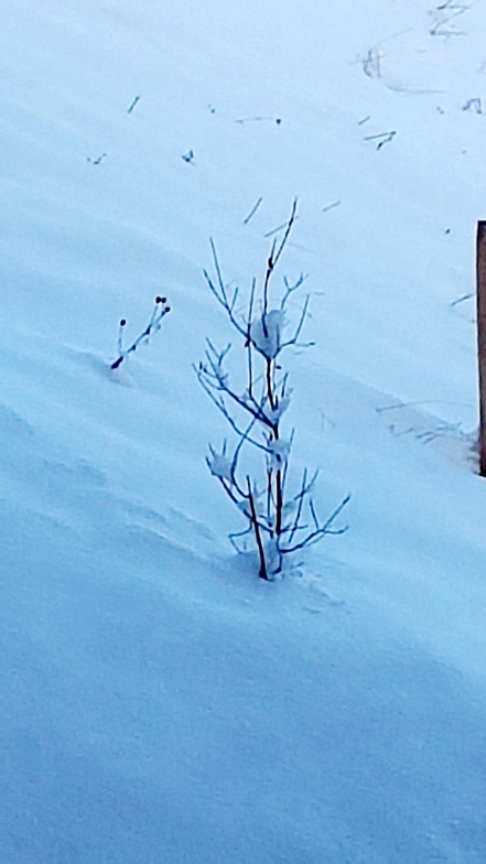 Nature in winter, Leysin