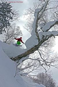 TreeSkiing!...Japan, Kiroro Resort photo